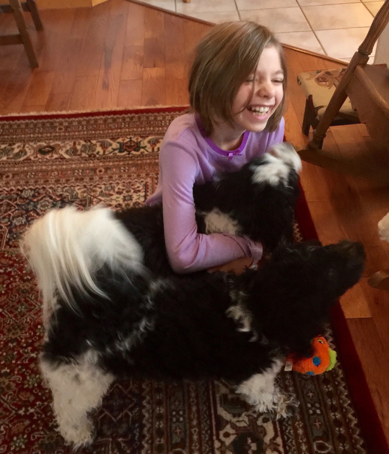 A young girls holding her dog, laughing and expressing joy.