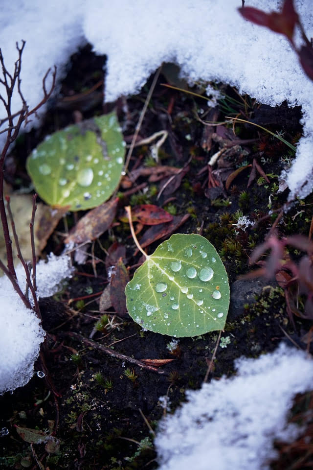 Green Leaves on a snowy wooded floor. Photo by Ludovic Migneault on Unsplash
